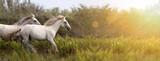 Banner WWW pięknych białych koni, jak działa w tej dziedzinie