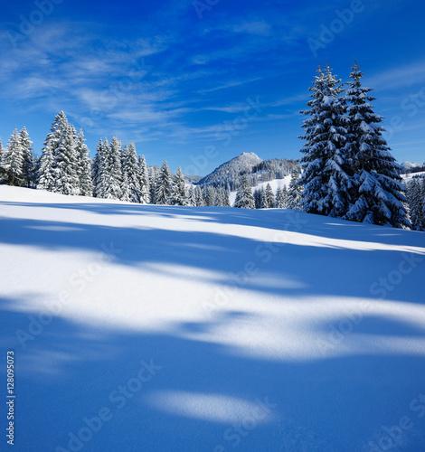 Tuinposter Donkerblauw Tief verschneite unberührte Winterlandschaft in den Bayerischen Alpen, schneebedeckte Tannen, funkelnde Schneekristalle im Sonnenlicht