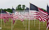 American Flags in Field Memorial Day - 128102610
