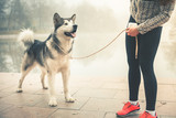 Image of young girl running with her dog, alaskan malamute