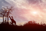 silhouette tree and giraffes on sunset