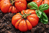 Tomato type corleone