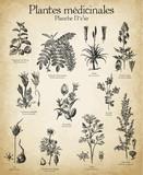 Gravures anciennes plantes médicinales N°1/10 - 128183805