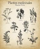Gravures anciennes plantes médicinales N°2/10 - 128184059