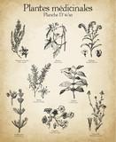 Gravures anciennes plantes médicinales N°4/10 - 128184818