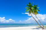 paradise tropical beach palm - 128238068