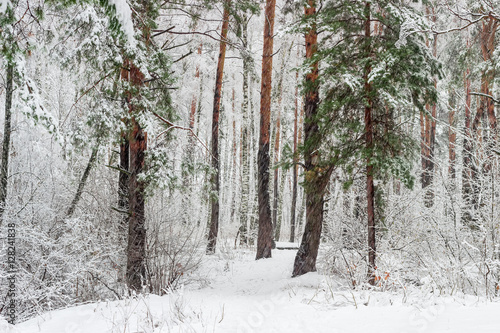 Winter forest during a heavy snowfall
