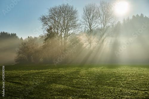 Fototapeta Sun rays shining through trees