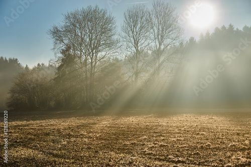 Fototapeta Field with rays of sun light though forest