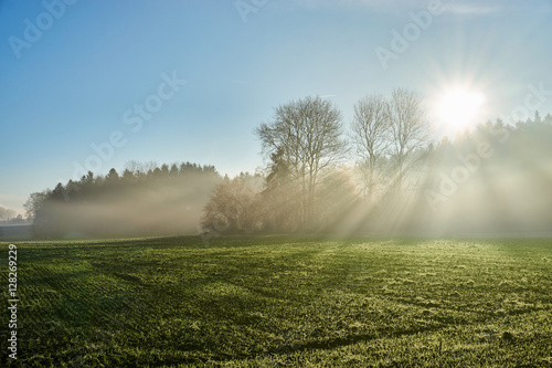 Fototapeta Landscape with sun rays through fog