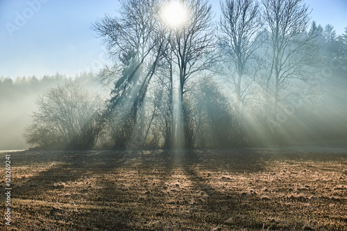 Fototapeta Sun rays through forest fog