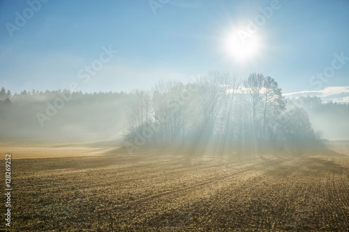 Fototapeta Sun shining through fog in the forest and field