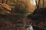 Sonbahar Yağmur Ormanları