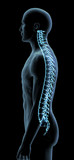 Blue X-ray Man with Vertebral Spinal Column, Side View