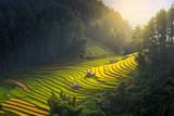 Sunrise and Beautiful nature  rice fields on terraced of Vietnam. Rice fields prepare the harvest at Northwest Vietnam.Vietnam landscapes.