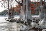 Fabulous red cypress tree wood autumn beautiful dramatic scenic landscape