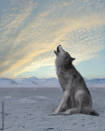 Plakat 3d render of a howling wolf on winter snow background