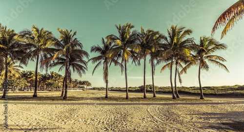 Foto op Aluminium Strand Miami South Beach park with palms, Florida