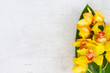 yellow orchid flowers and green leaf border on white aged background