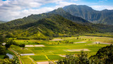 Panoramic landscape view of Hanalei valley and green taro fields