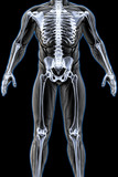 mans body under X-rays. 3D illustration.
