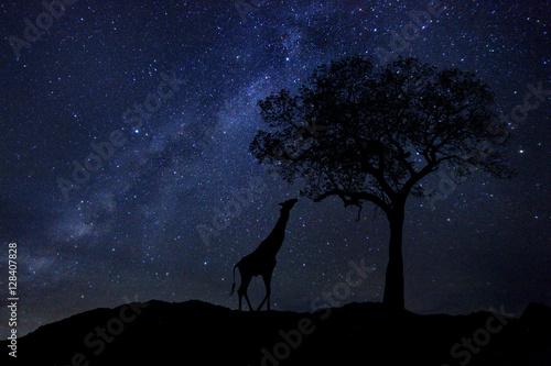 Fotobehang Baobab Star Trails Milk Way in South Africa Night Sky