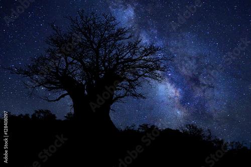 Aluminium Baobab Star Trails Milk Way in South Africa Night Sky