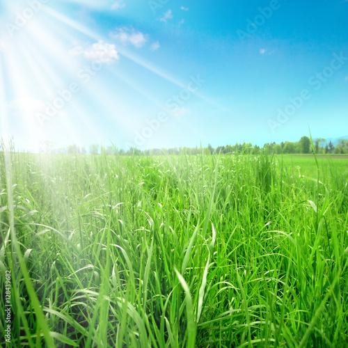 Poster green landscape