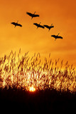 Beautiful sky on sunset or sunrise with flying birds natural bac