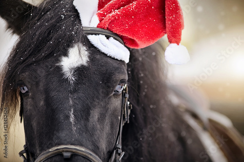 Poster Portrait of a horse in a a red Santa Claus hat