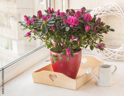 Fotobehang Azalea Crimson azalea and white watering can on the window