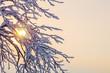 Winter background - frozen branches against sunlight