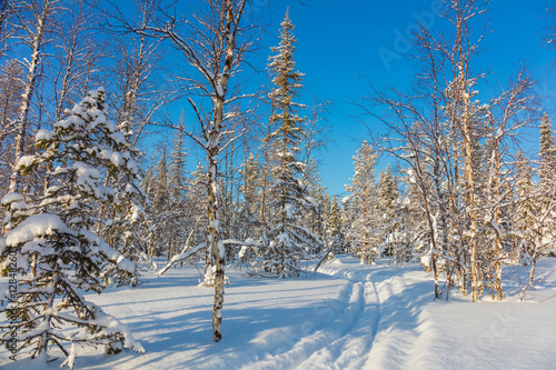 Skiing trail in beautiful winter forest landscape