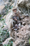 Mother monkey with baby monkey with green background