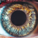 Macro eyes pupil iris oculist blue yellow