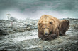 Постер, плакат: Old Grizzly Bear taking a break head in paws