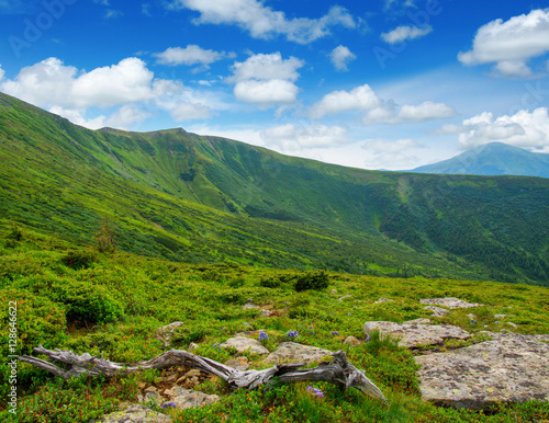 Poster Mountain landscape in the summer