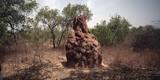 afrykańska sawanna - kopiec termitów