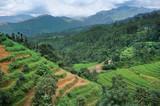 Terrace rice fields near Katmandu, Nepal.