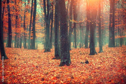 Naklejka Autumn landscape, trees and leaves. Fall scene