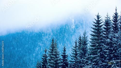 Fototapeta pine forest in winter mountains