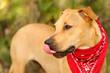 Dog Face Tongue