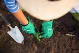 High angle view of gardener planting seedling in dirt at garden
