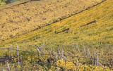 colori dautunno; vigne a Termeno