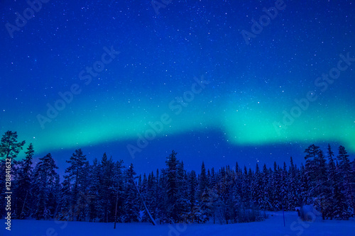 Northern Lights over the Winter Forest