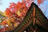 世界遺産 秋の昌徳宮・秘苑