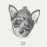 Chihuahua. vector. drawing pen. dog in a knitted cap