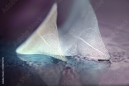 White transparent skeleton leaf with beautiful texture on a lilac abstract background on glass with shiny water dew drops and circular bokeh close-up macro. Gentle romantic artistic image.