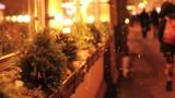 Christmas light on the street of Saint Petersburg, selective focused video