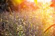 Wild meadow flowers on evening sunlight background.
